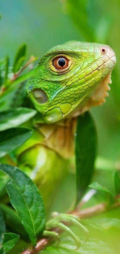 (via Green.. Lizard ❤   A World of Color   Pinterest)