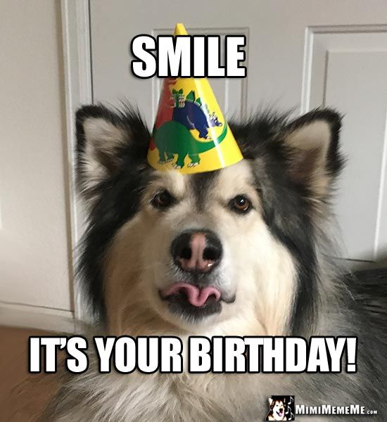 Party Dog Making A Funny Face Says: Smile, It's Your