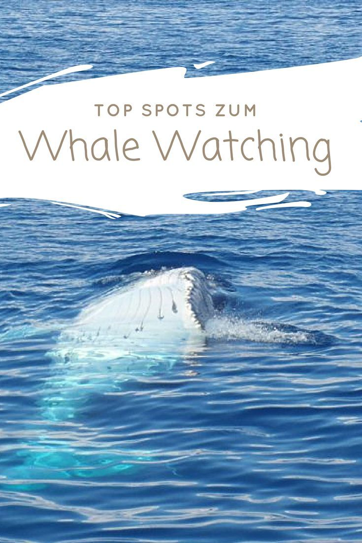Wale beobachten: 11 Whale Watching Spots | Wildlife and ...