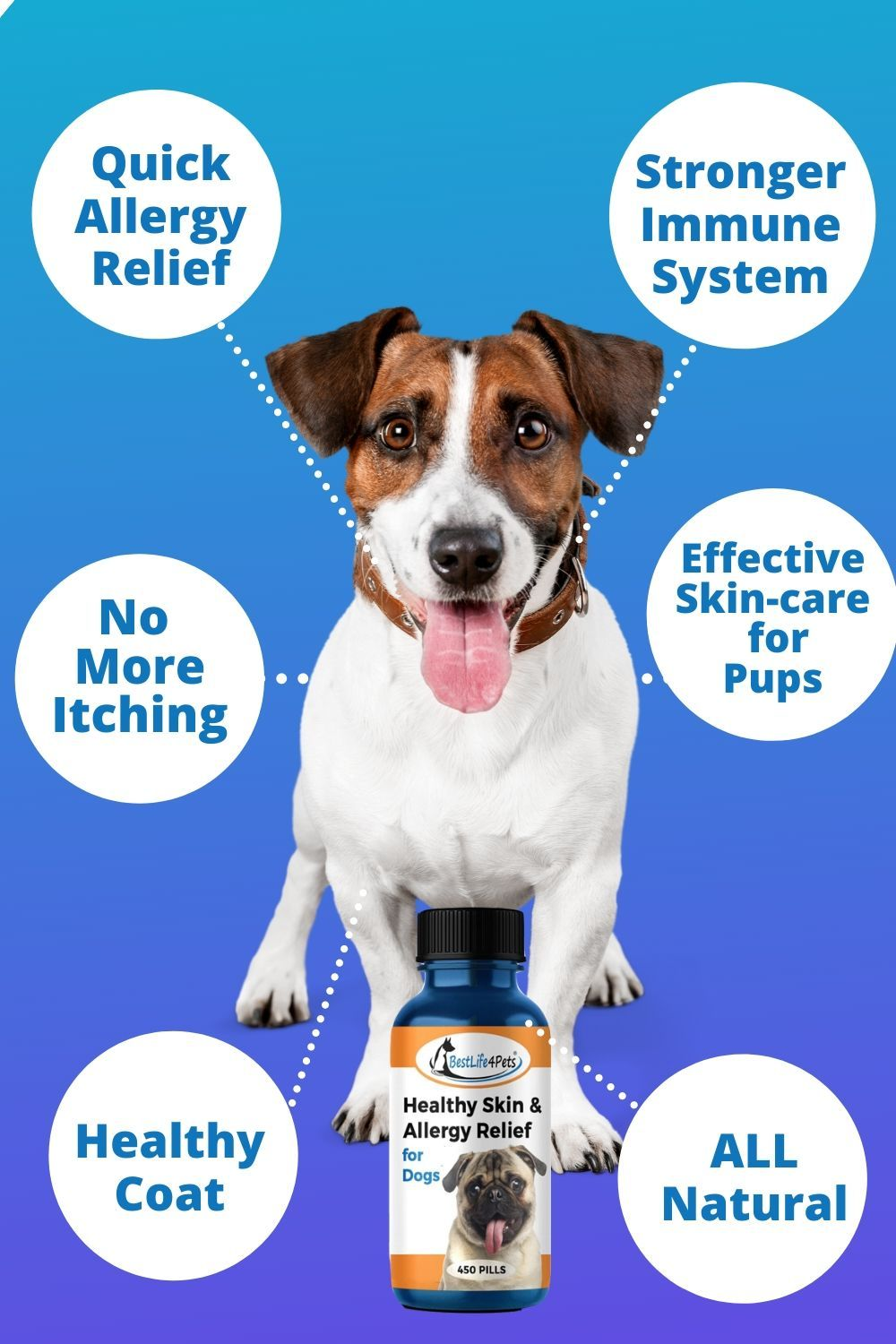 S Your Dog Dealing With The Uncomfortable Symptoms Of Allergic
