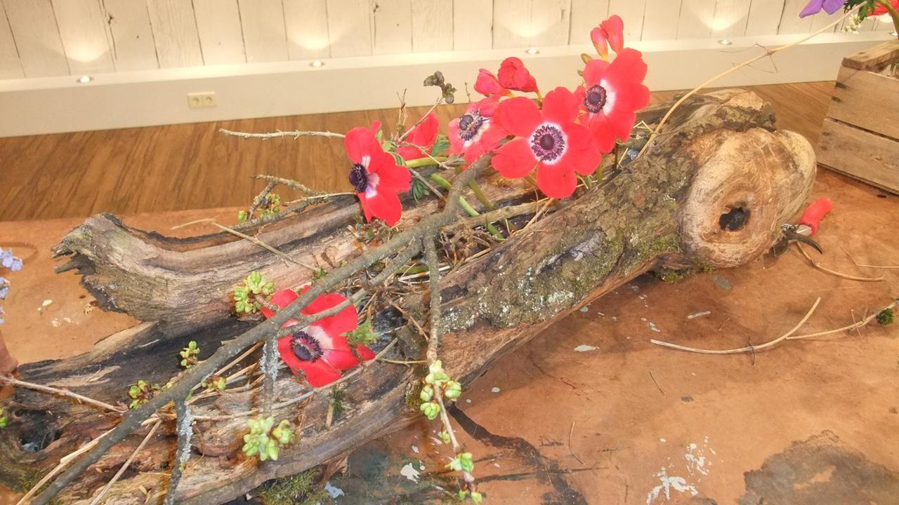 Holger Schweizer anemonen sind wunderschöne frühlingsblüten holger schweizer lässt