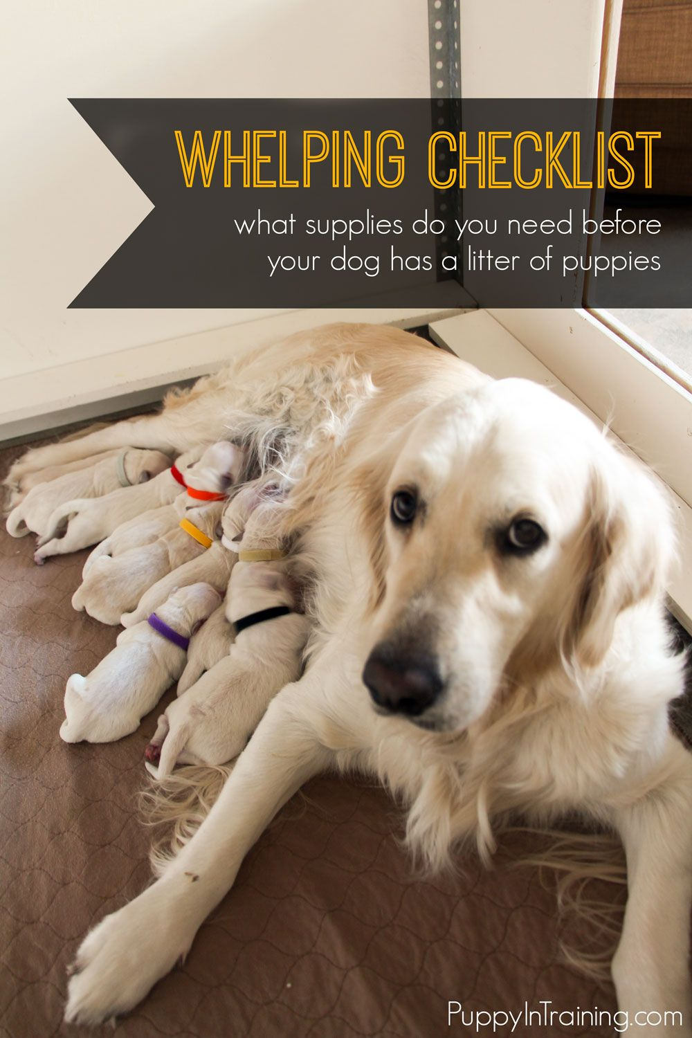 Whelping Checklist What Supplies Do You Need Before Your Dog Has