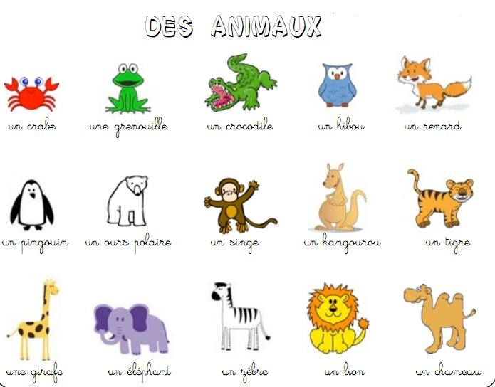 Favorit les animaux | FLE : les animaux | Pinterest | Language, Learning  XG77
