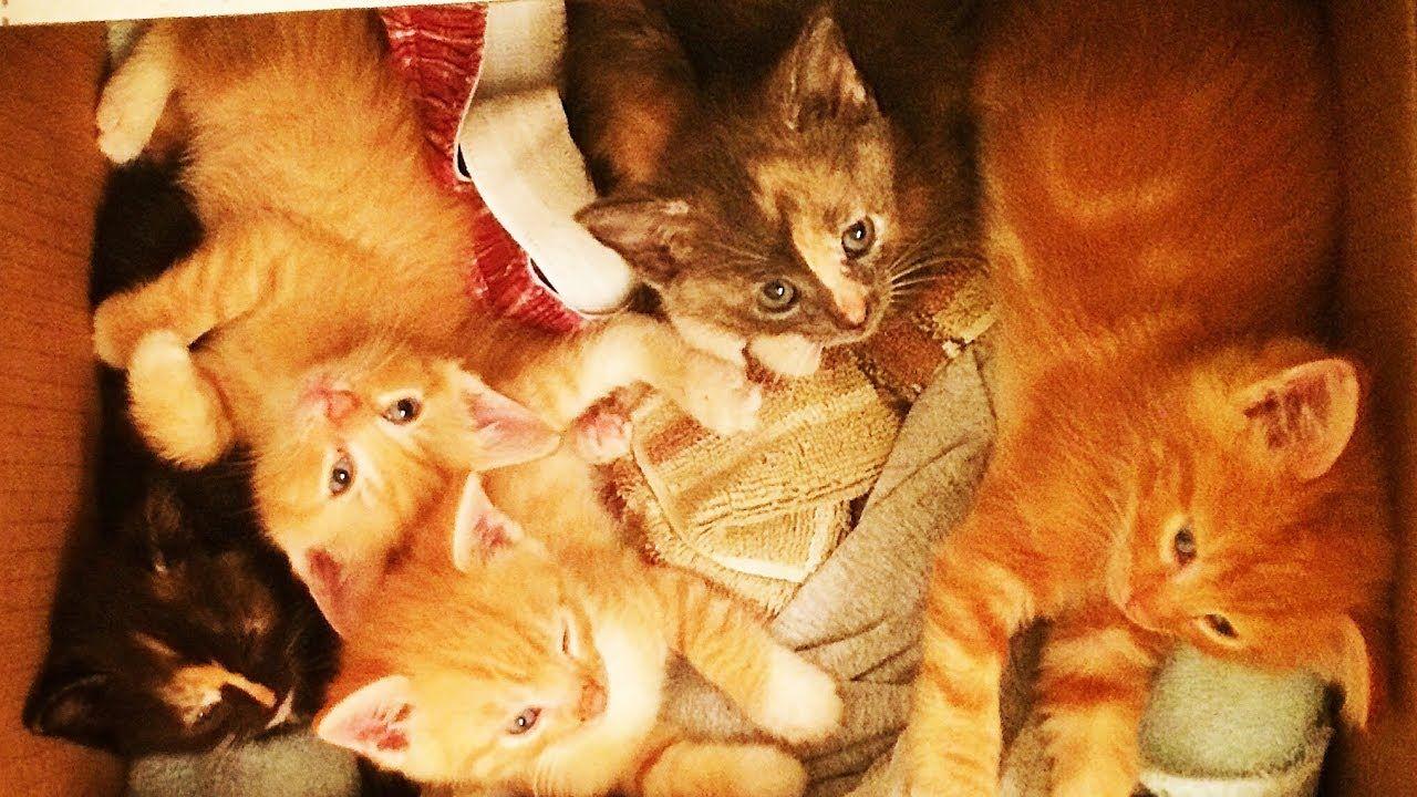 Baby Kittens Wrestling In The Bathroom Youtube Baby Kittens Kittens Baby Animals Funny