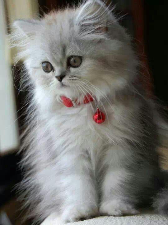 Awww So Cute That Fur Those Eyes Kittens Cutest Cute Cats