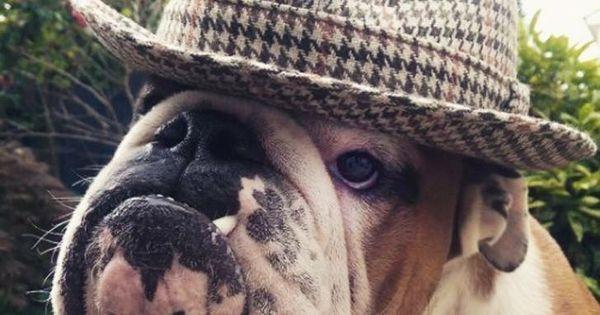 Pin By Jako Nauta On Bulldogs Pinterest Bulldog Funny Bully