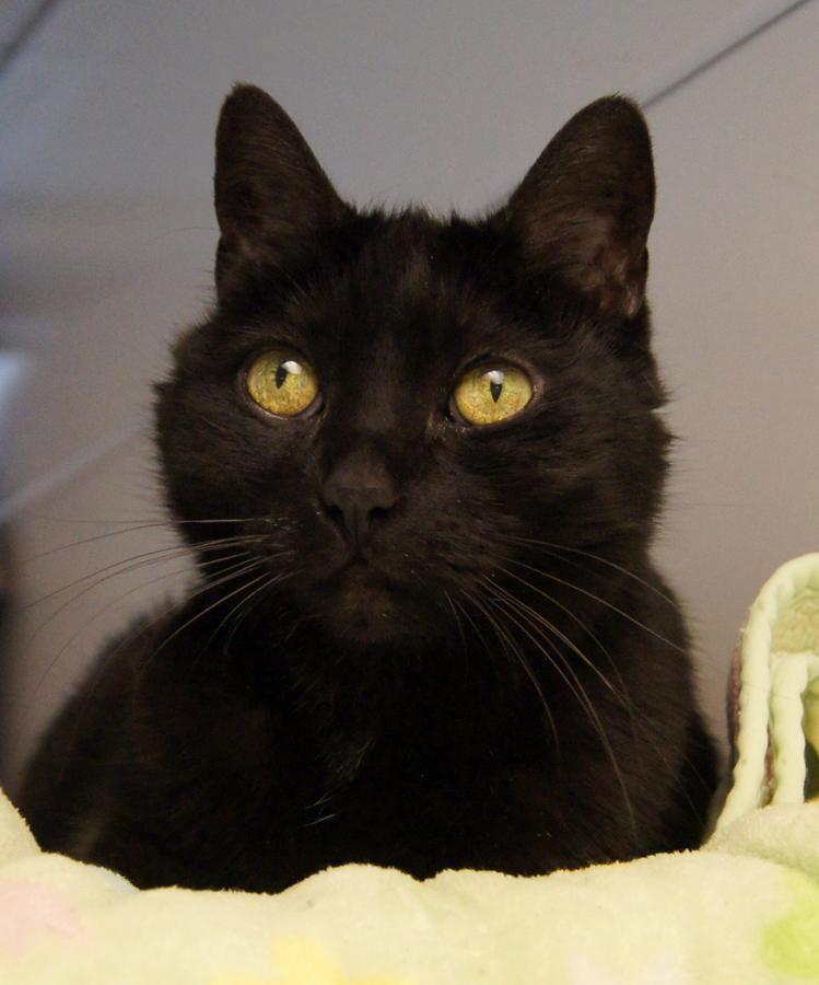 Adopt Hedwig On Petfinder Cat Adoption Happy Cat Beautiful Cats