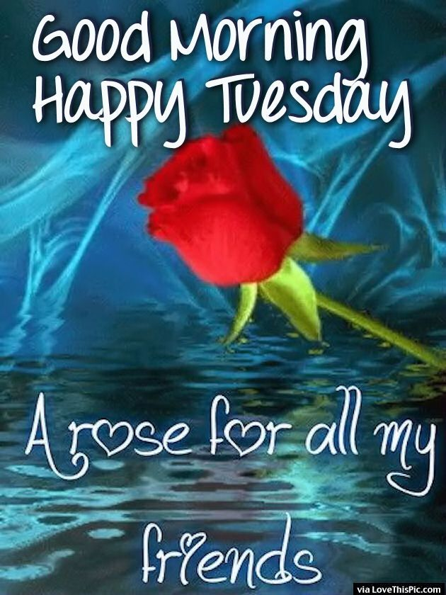Tuesday Good Morning Friends Good Morning Happy Tuesday A Rose For