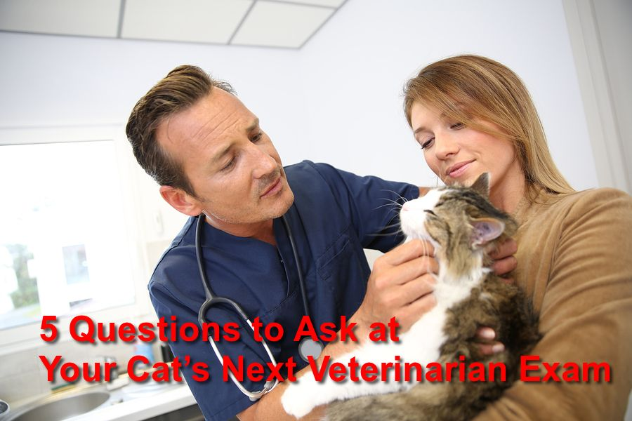 5 Questions to Ask at Your Cat's Next Veterinarian Exam