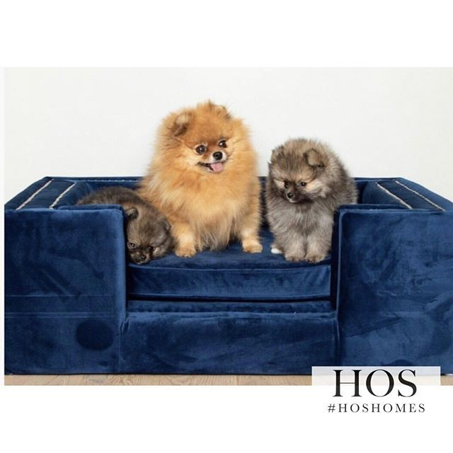 Our Pet Deserve The Best This Lorenzo Pet Bed Is Now Only