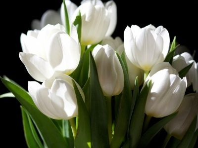 Flores blancas flowers Pinterest White flowers and Flowers