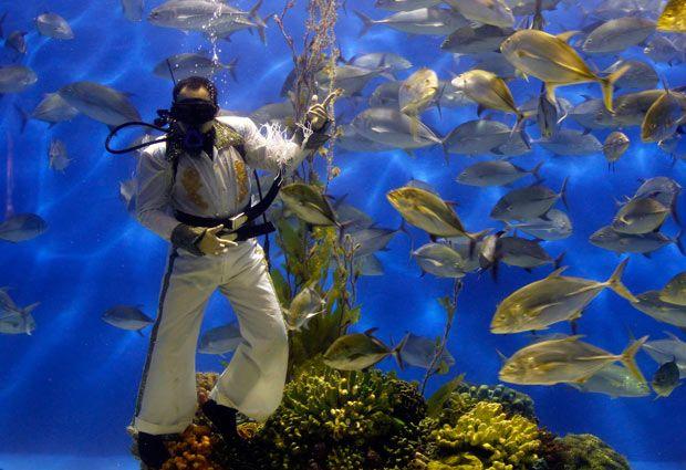 A Diver Dressed As Elvis Presley Poses Inside An Aquarium Of The Ocean Park In Manila Fish Pet Elvis Ocean Park