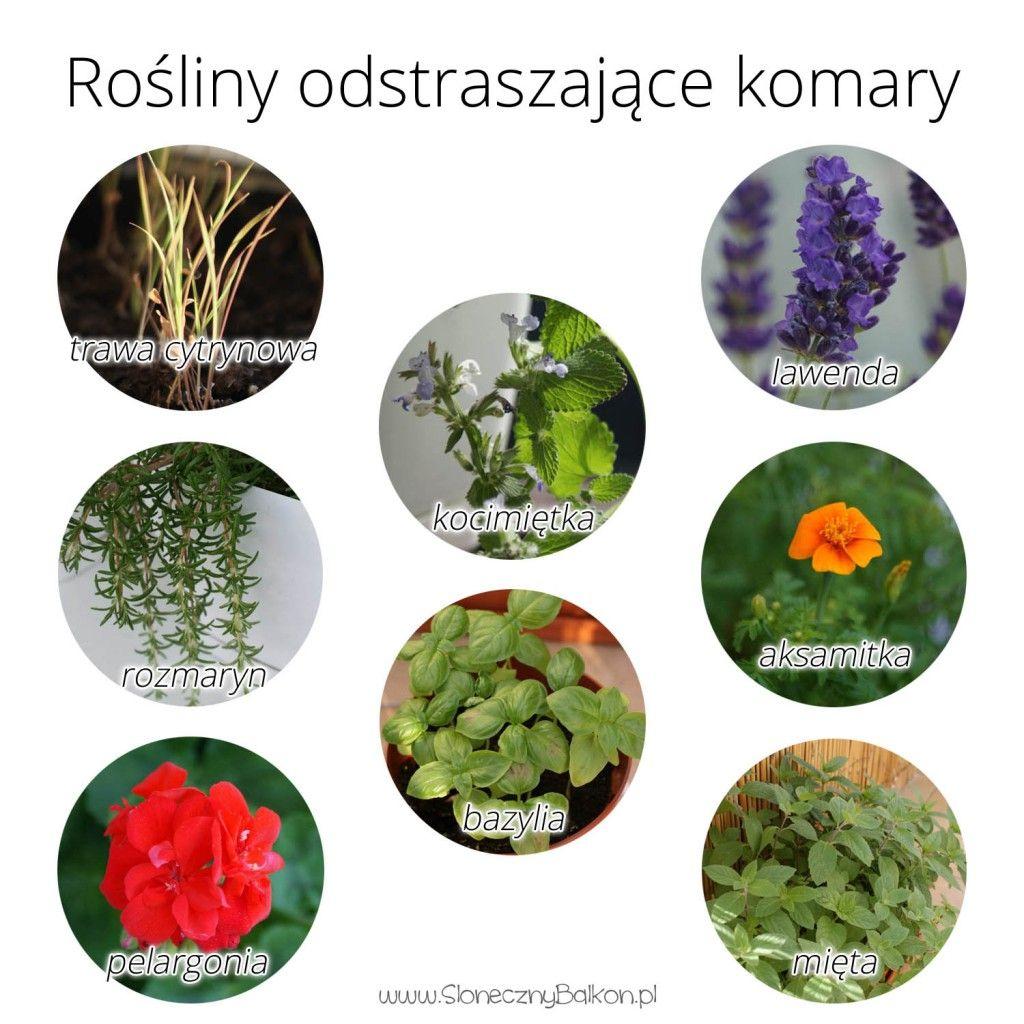 Rosliny Odstraszajace Komary Home Decor Decorative Plates Decor