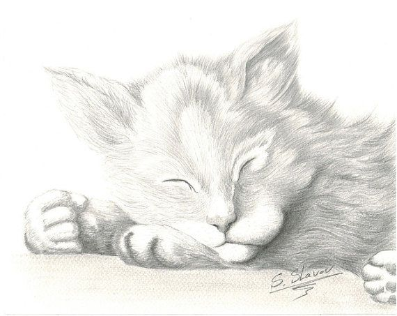 dessin animaux - Dessin D Animaux