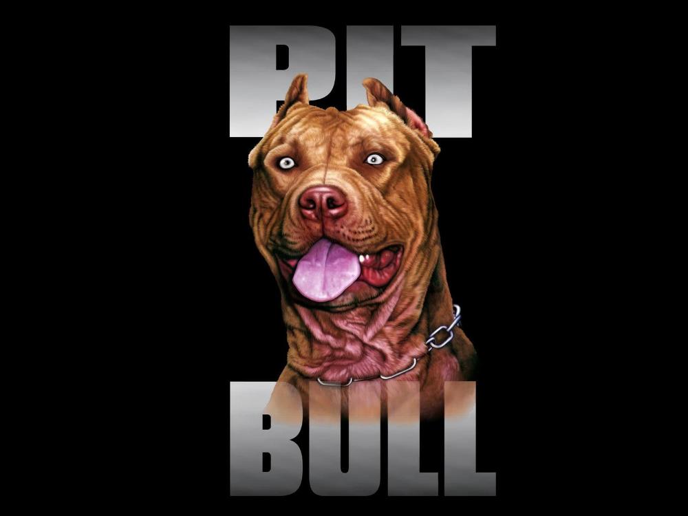 10 Potret Pitbull Wallpaper Hd Pitbull Wallpaper Dog Wallpaper Iphone Dog Wallpaper
