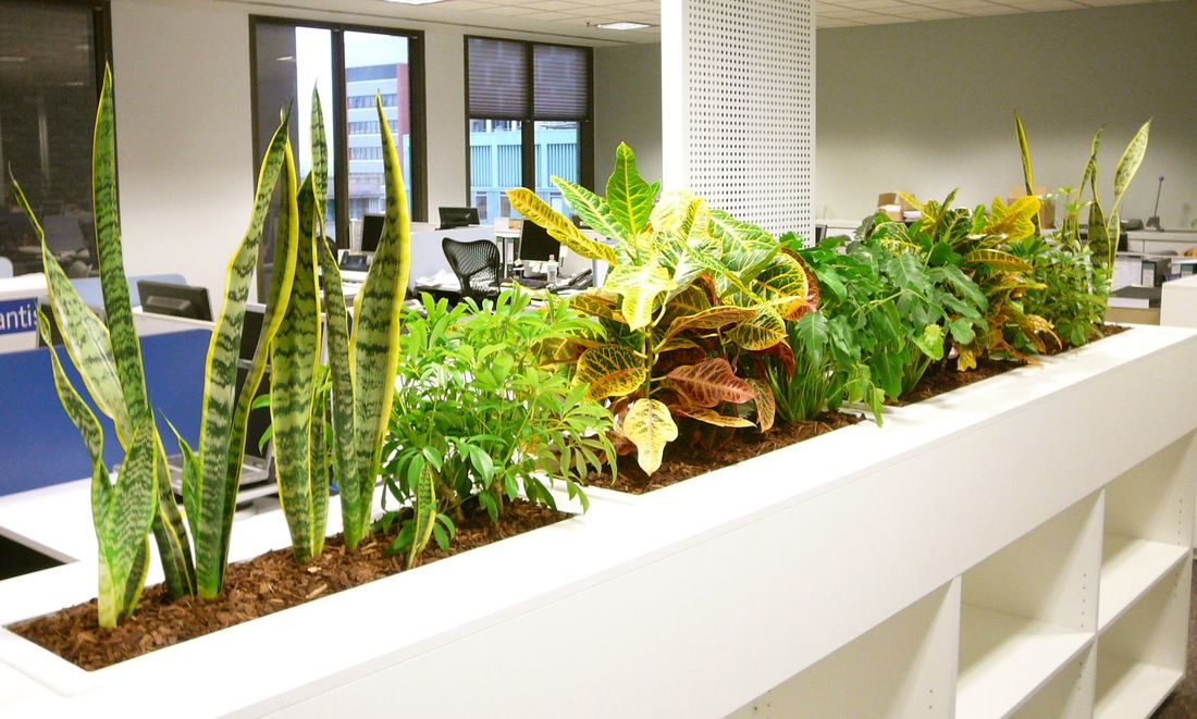 best indoor plants for office. Having #plants In Offices Not Only Increases #productivity, It Happiness Too. Best Indoor Plants For Office E