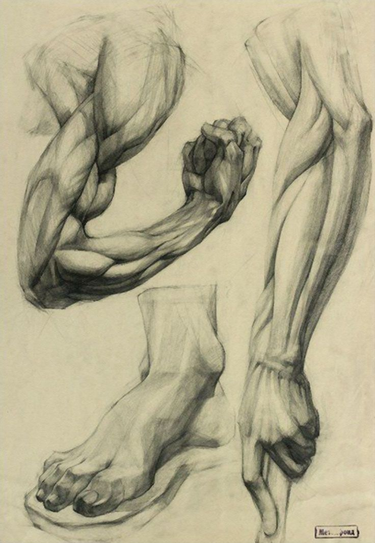 Arms, hands, foot academic drawings | Anatomie Hände und Füße ...