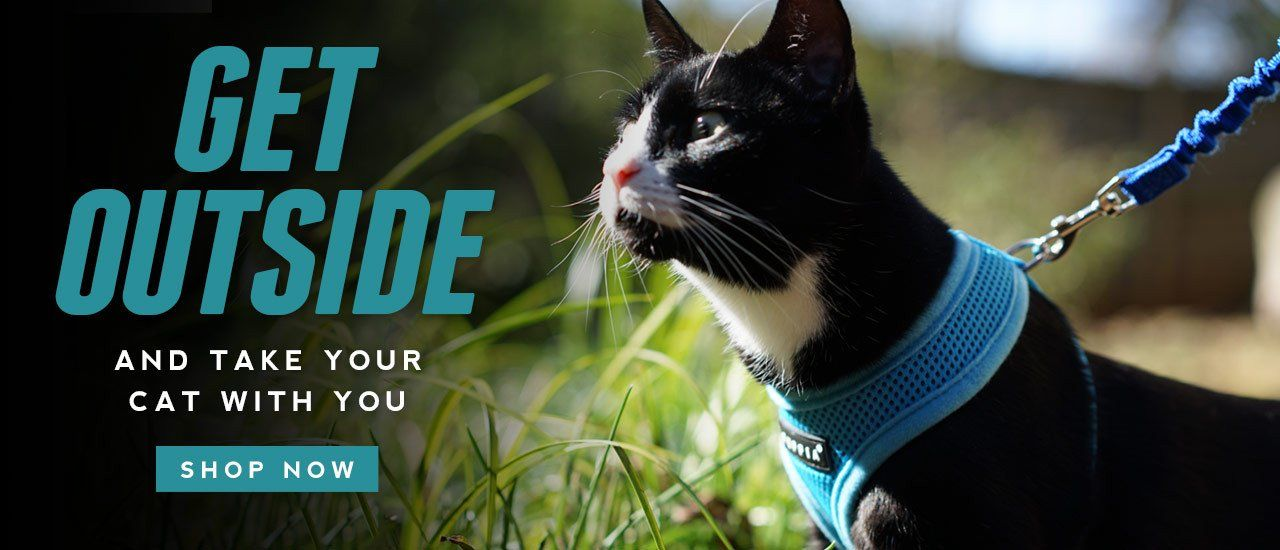 Cat gear adventure cat cat harness best cat harness