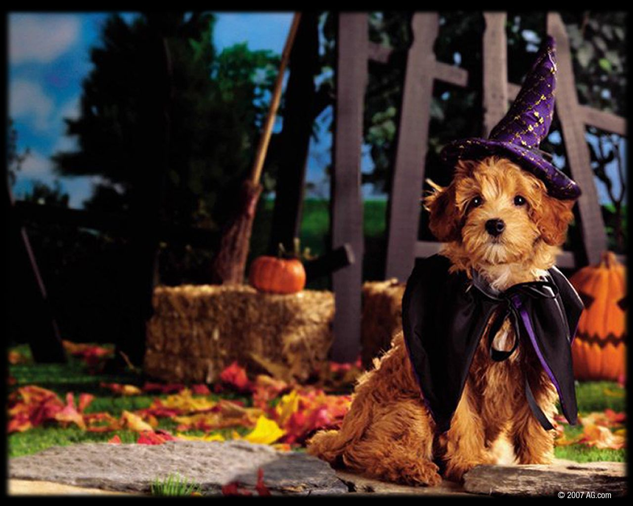 Movies For Halloween 70 Funny Scary Artistic Halloween Wallpapers Dog Halloween Halloween Puppy Animal Lover