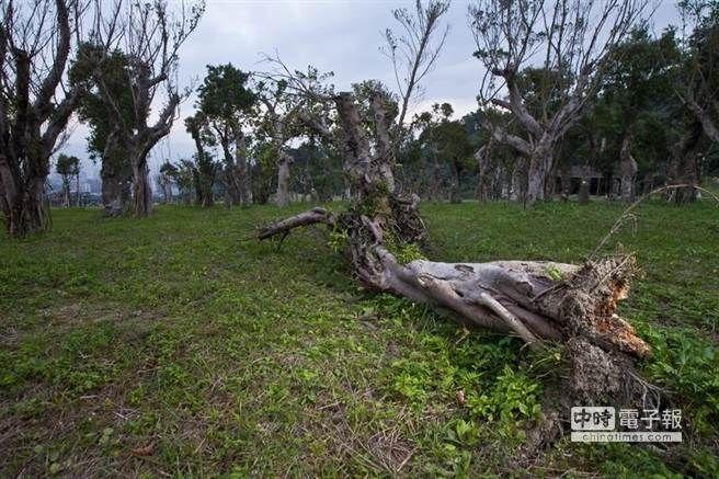 城市樹木的死亡行軍 4000棵樹慘遭凌遲