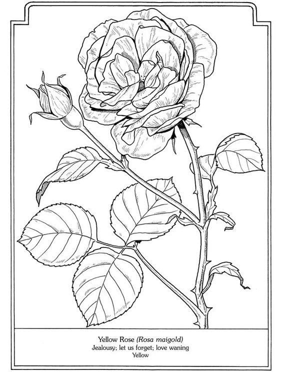 60 Desenhos para Adultos - Maio/2018 | Mandalas, Rosas y Setas