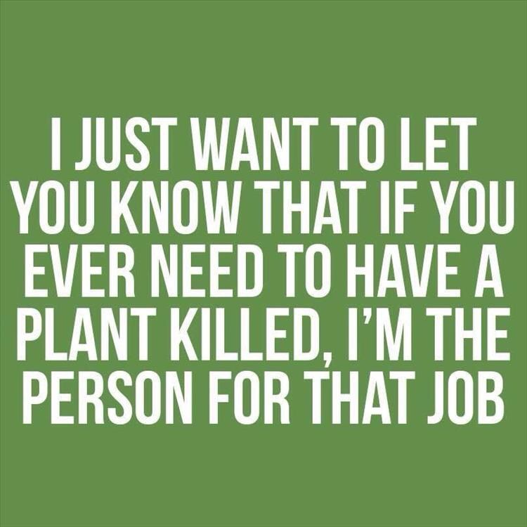 Some people have a Green Thumb. I have a Black Thumb. | Funny quotes,  Morning humor, I love to laugh