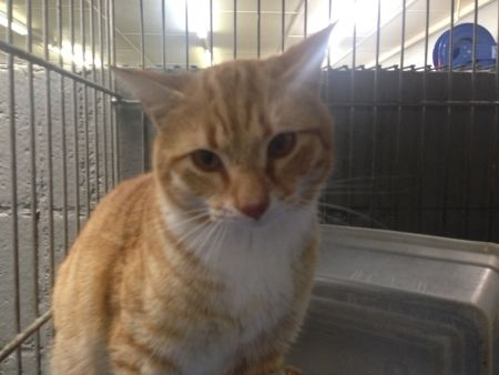 Adopt Mason on Orange, white cat, Animals, Animal shelter