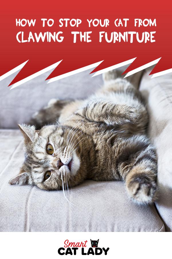 Vet Talks Hot Spots On Cats Nhv Pet Blog In 2020 Hot Spot Pet Blog Cats