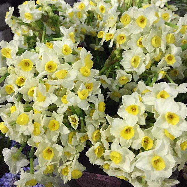 Hmmm That Smell It S Spring Daffodil Bridal Crown By Fam Flower Farm For Fragrance Bridal Crown Is Really Th Best Smelling Flowers Bridal Crown Flower Farm