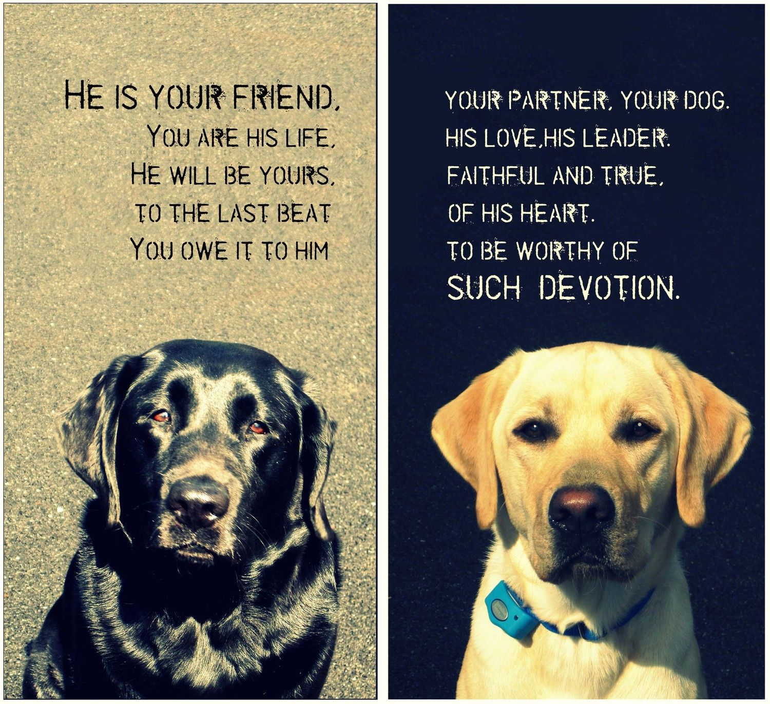 Wedding Gifts For Dog Lovers: Dog PET Lover Loss Of Pet Portrait Art Words Photo