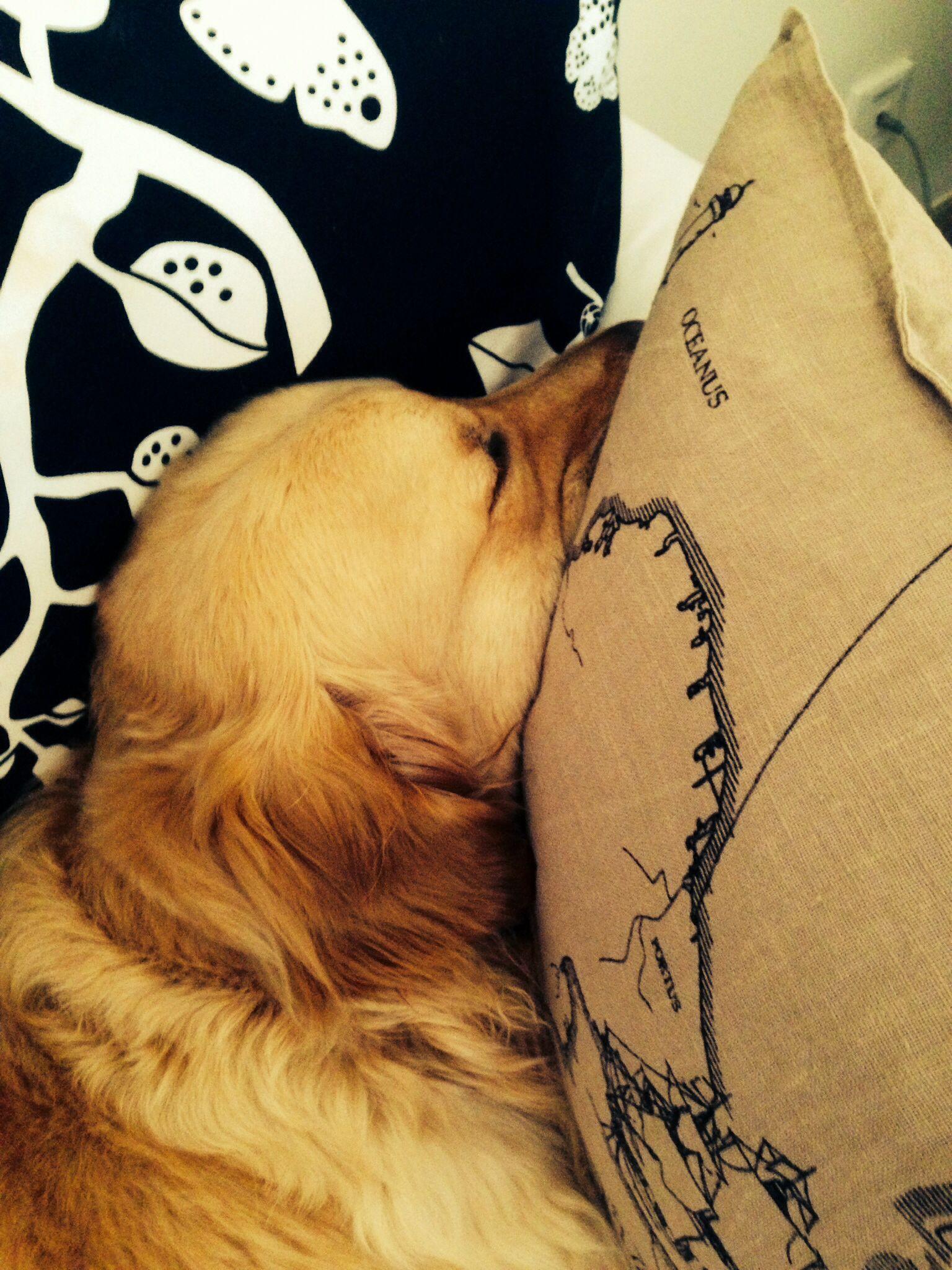That's how I cozy up#caesar