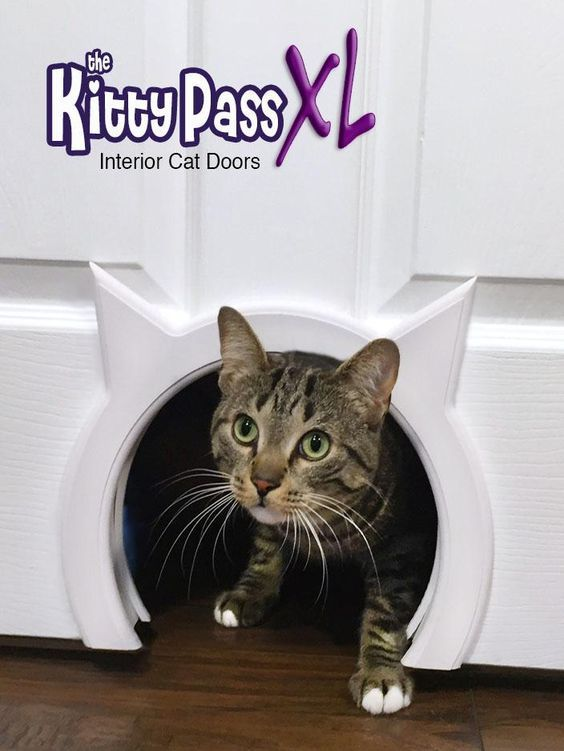 The kitty pass xl interior cat door cats pinterest - The kitty pass interior cat door ...