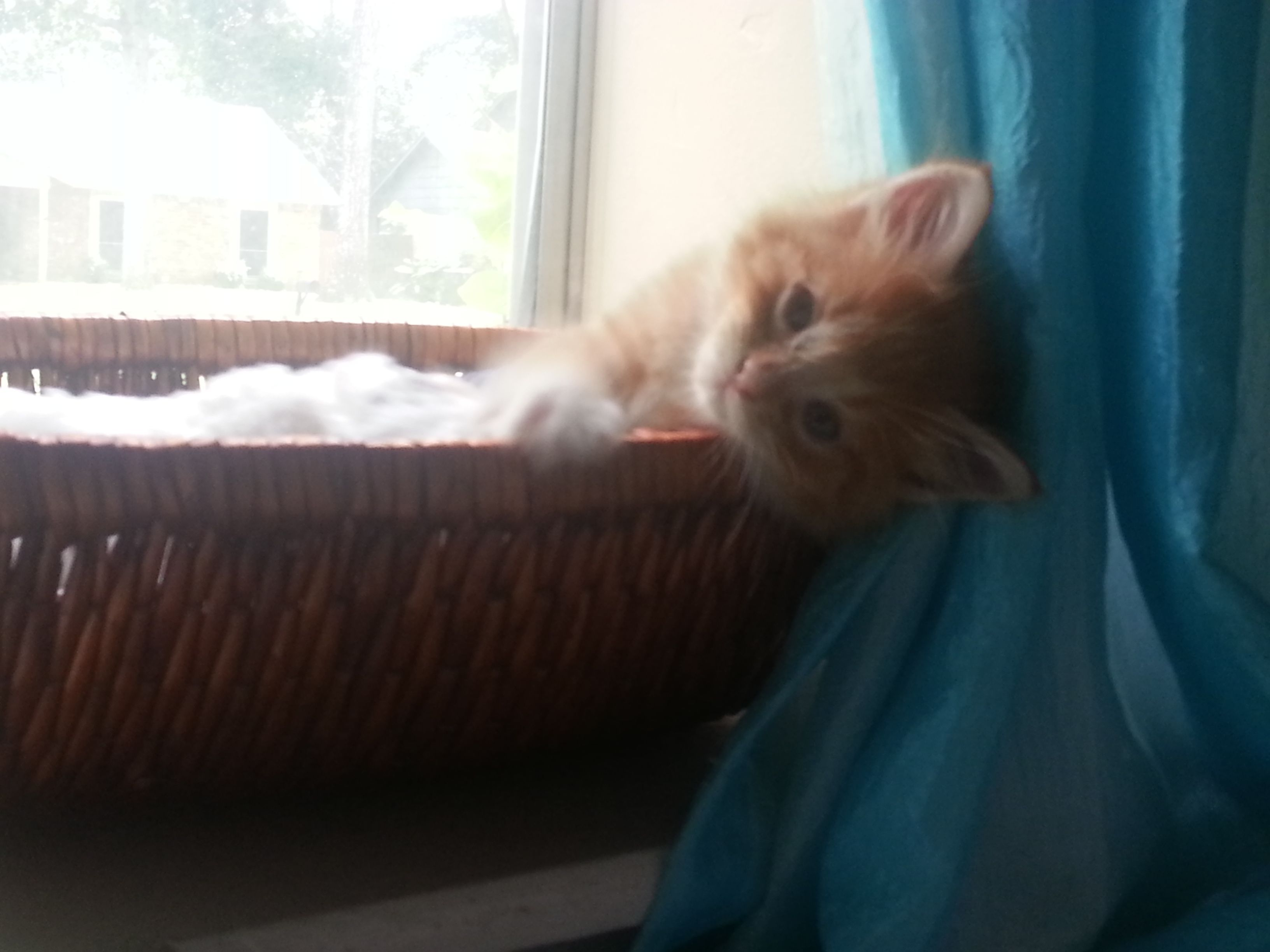Our new kitten, Blaze. ) He was left in a box in front