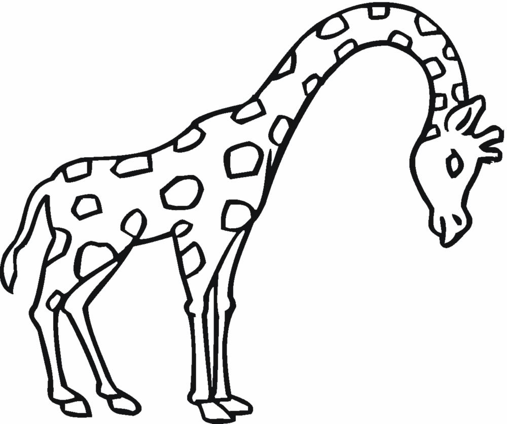 Maestra de Infantil: Animales salvajes para colorear | animal ...