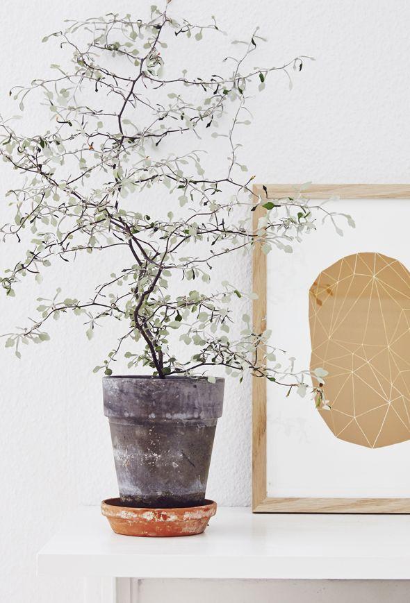 Med den helt rigtige plante i den helt rigtige potte kan du forandre ...