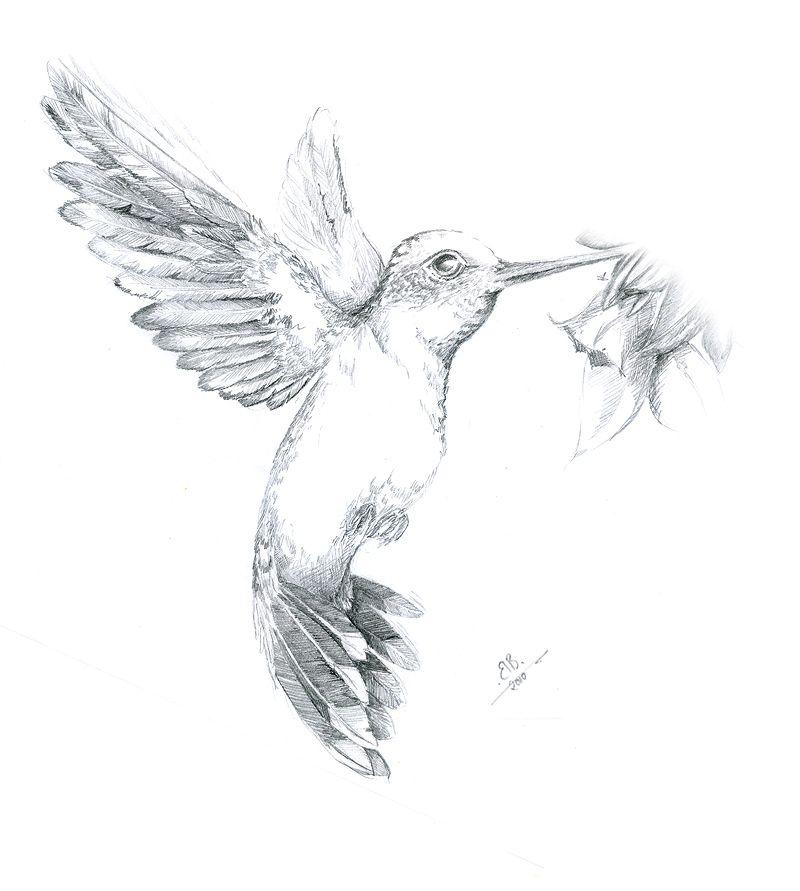 kolibri kolibri vogel zeichnungen tiere und wandmalereien. Black Bedroom Furniture Sets. Home Design Ideas