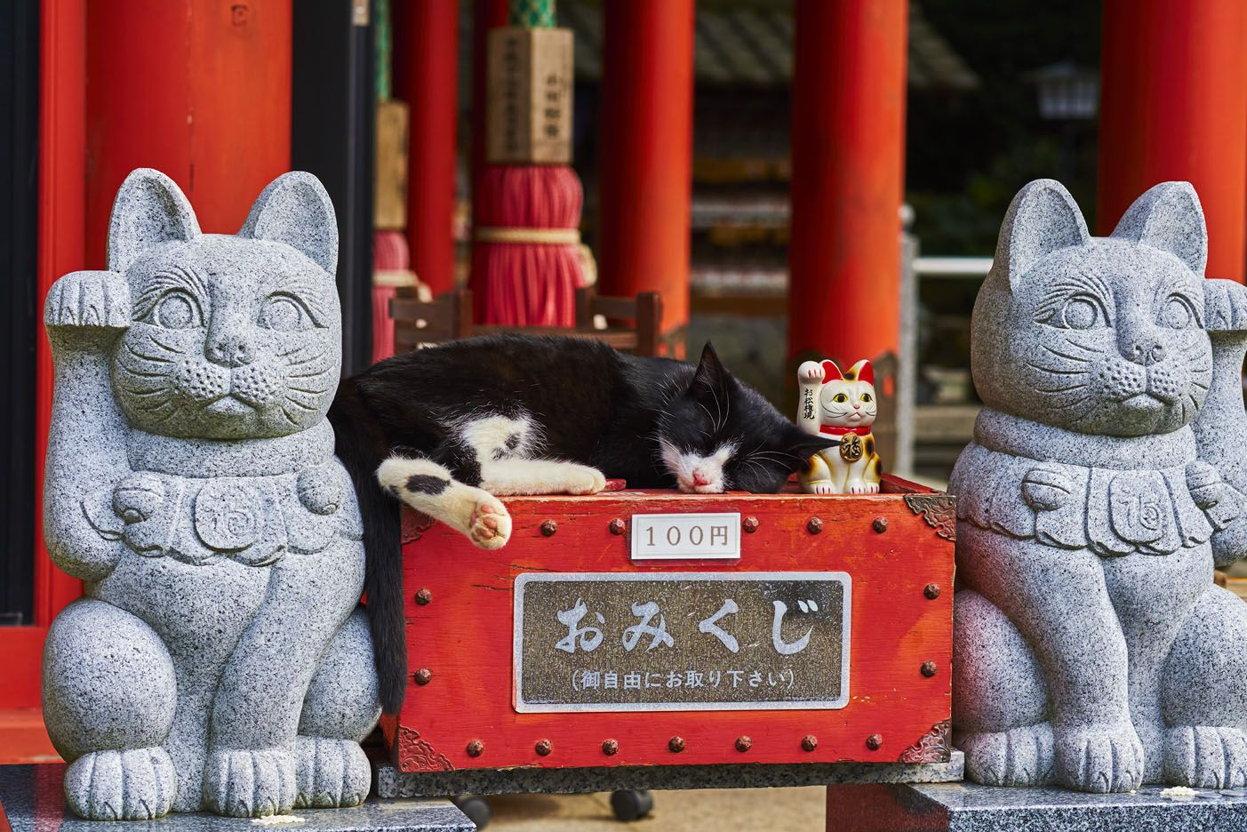 Tuul Et Bruno Morandi The Great Cat Odyssey Great Cat Cats Greatful