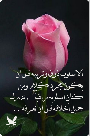 Pin By الحاج صلاح المرشدي On ماعده ثقه بنفسه وتحب Plants Rose Flowers