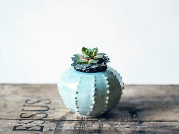 Handmade ceramic petit succulent planter- flower pot- flowers- air planter- sea urchin- white #plantersflowers