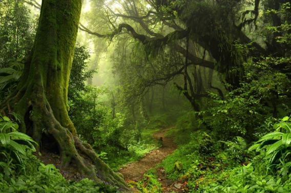 #landscapephotography #landscape #photography #forest