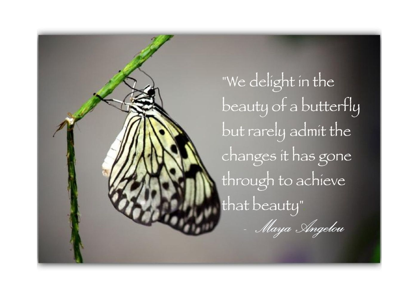 Postcard quote maya angelou we delight in the beauty of a postcard quote maya angelou we delight in the beauty of a butterfly but online greeting cardsthe kristyandbryce Images