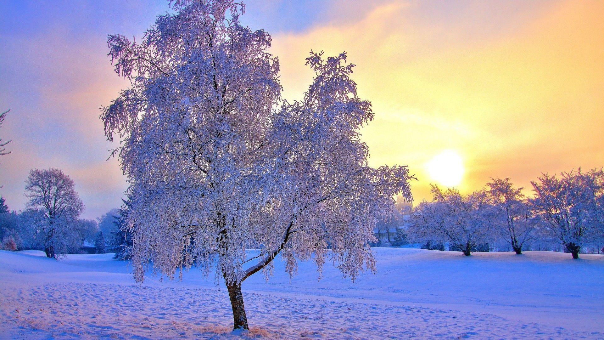 Fond ecran paysage arbre givr hiver wallpaper hd tree ice for Fond ecran hiver hd