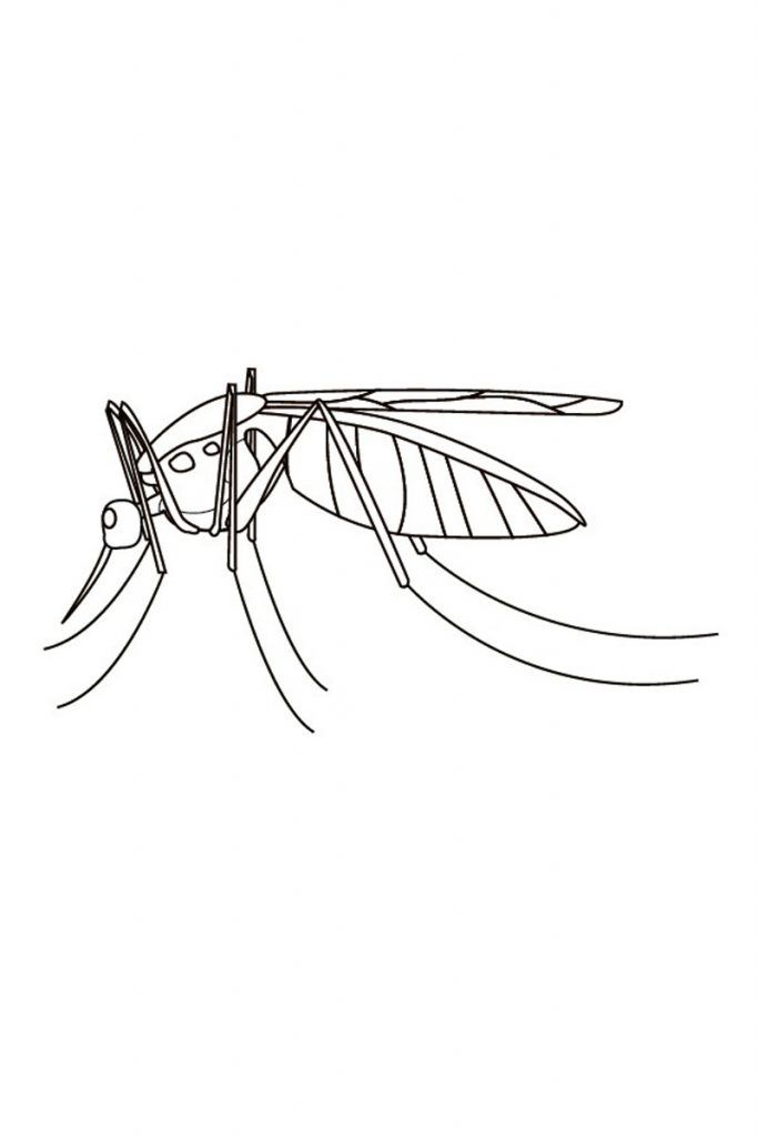 Free Printable Mosquito Coloring Pages For Kids Animal Coloring