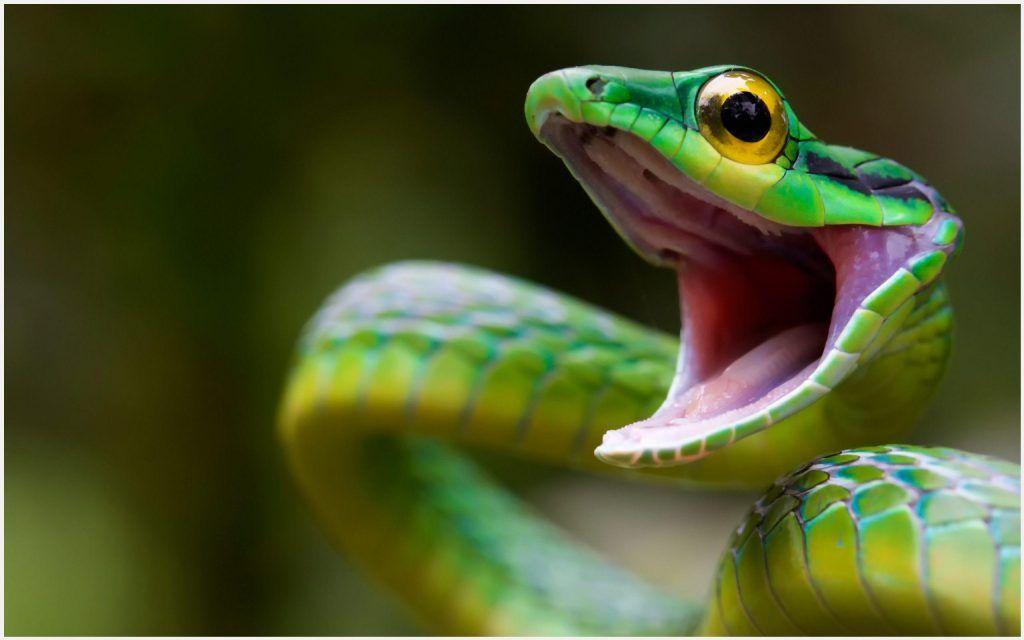 green snakes hd wallpaper green snake hd wallpaper animal