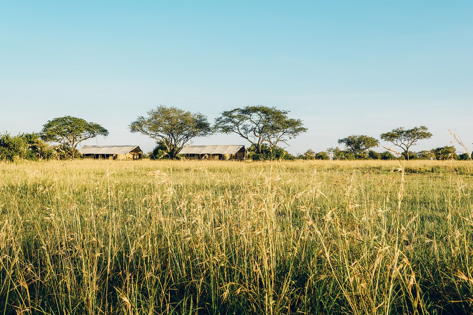 Zuma beach wedding venues  This Luxury Safari Brand is Leading The Way in EcoTourism  Tourism