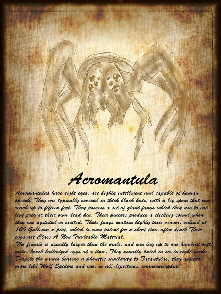 Acromantula Harry Potter Drawings Magical Creatures Harry Potter Harry Potter Poster
