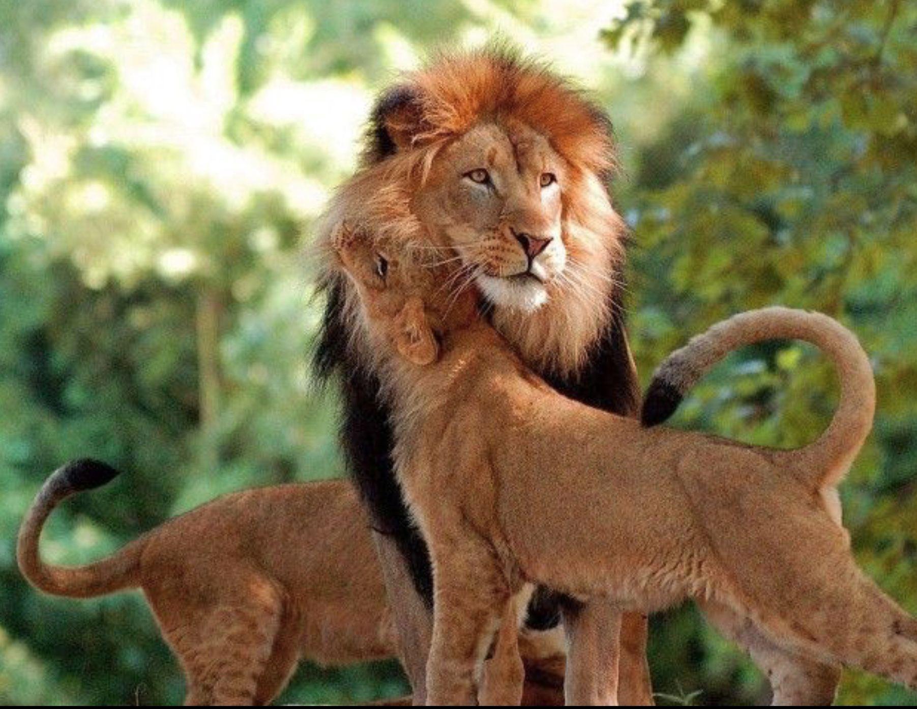 хороших, известных картинки про животных в паре этом, врастая очень