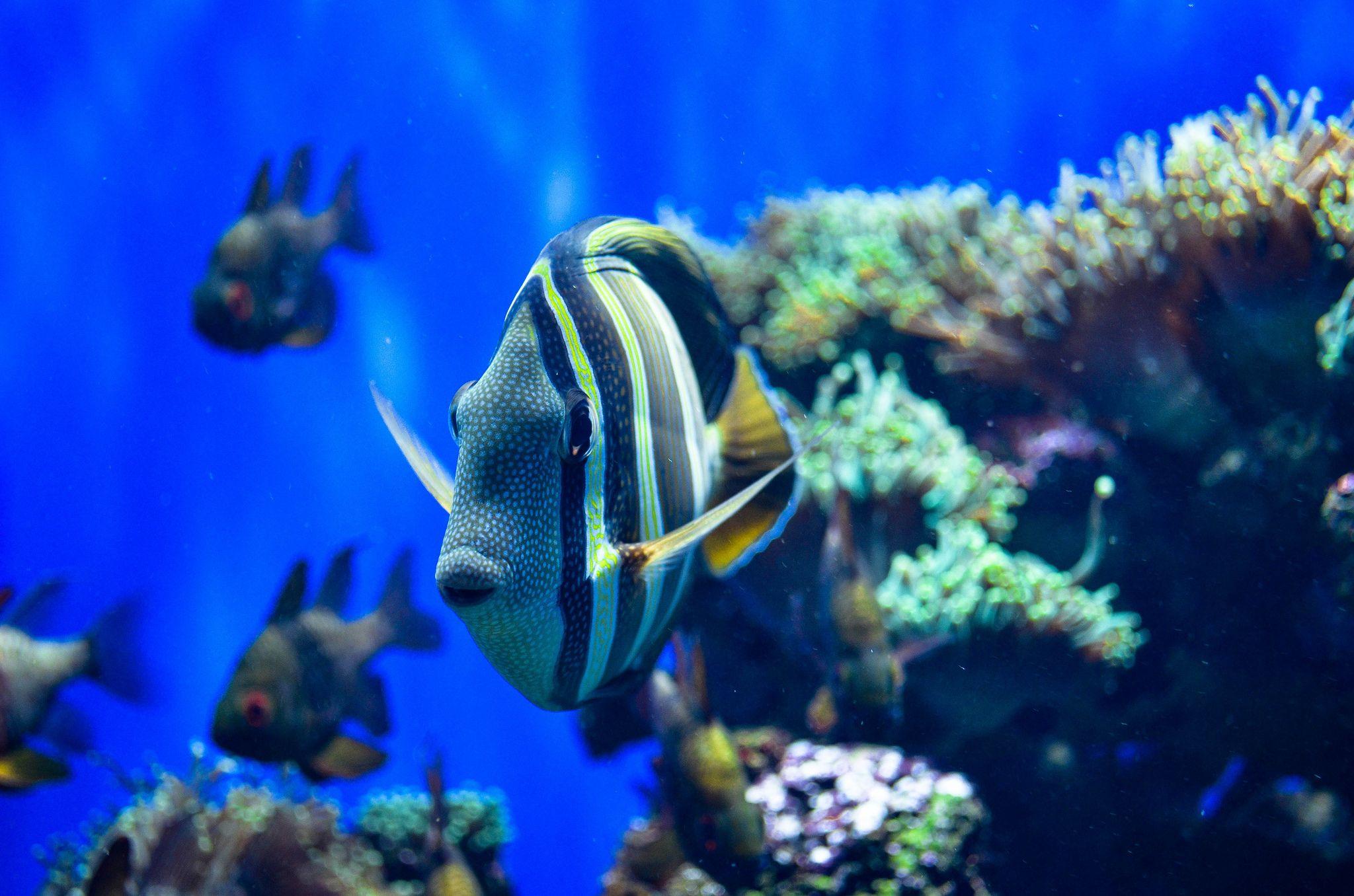 London Zoo Aquarium London Zoo Zoo Reef Tank