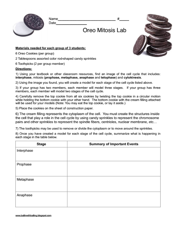 Oreo Mitosis Student Worksheet Balling Biology lessons