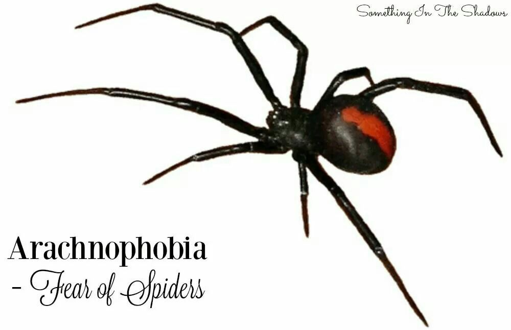 Pin By Pete Madrigal On Cool Horror Stuff Pinterest Spider